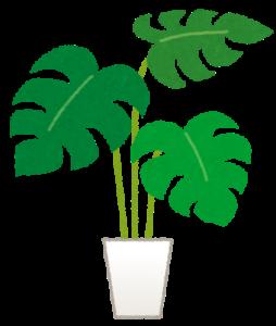 植物 存在価値